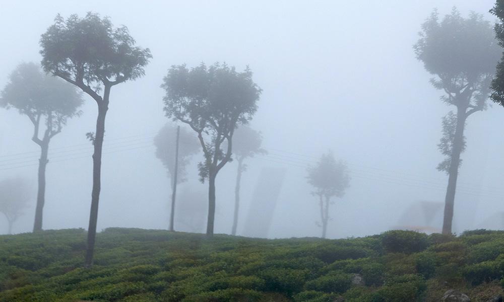 セイロン島 茶畑